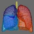 3D lung visualisation