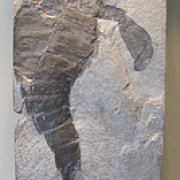 Fossil at The Manchester Museum
