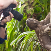 Chris Smith photographing a sloth © Chris Smith/Liz Peel